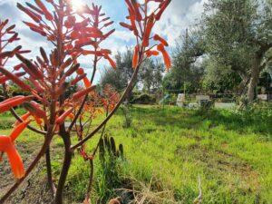 Cod: 11110 – Terreno agricolo 2700mq – Mascalucia